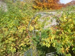 garden-rose-hips-31102016