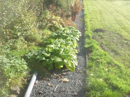 garden-seedlings-31102016