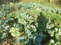 garden-veg-patch-2-31102016