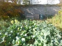garden-veg-patch-3-31102016
