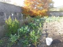 garden-veg-patch-31102016
