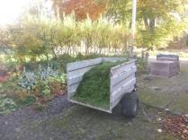 grass-cuttings-31102016