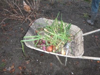 swg-veggies-27112016