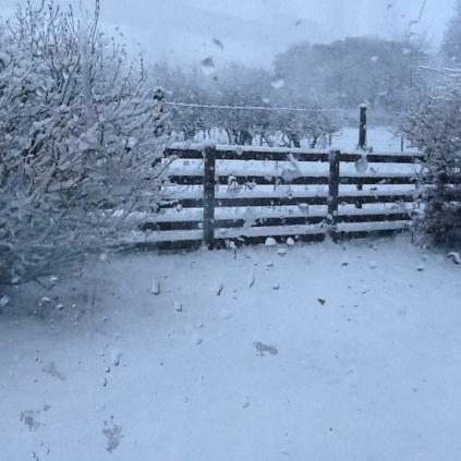 snow-4-12012017-sh