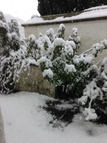 Snow 1 - 27022017 - SH