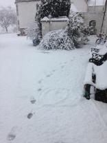 Snow 3 - 27022017 - SH