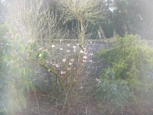 Herb border 1 - 12032017