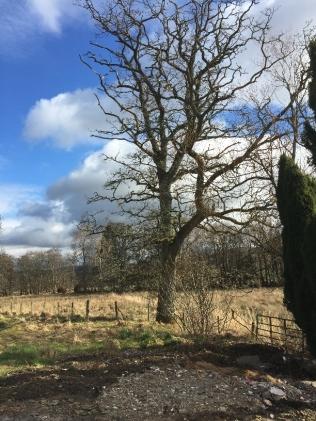 Oak tree 2 - 12032017