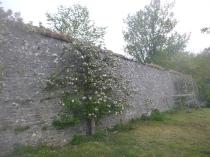 Apple blossom 1 - 14052017