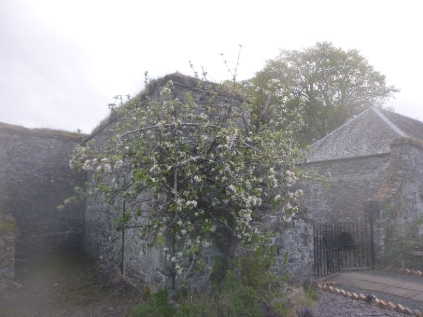 Apple blossom 3 - 14052017