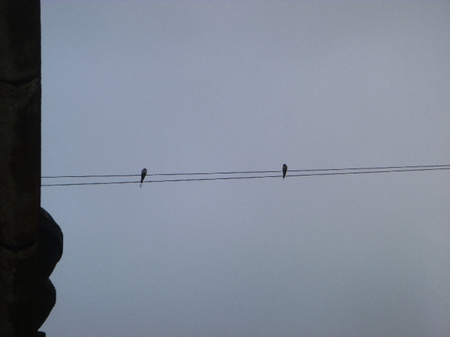 Birds on the line - 07052017