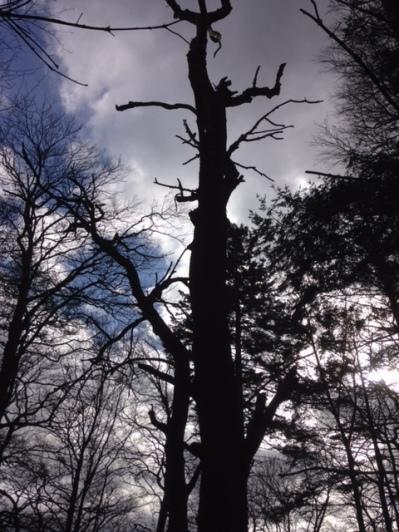 Dead trees 1 - 21042017 - SH