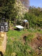Flower garden 6 - 10052017