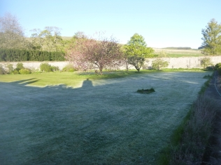 Frost on back lawn 1 - 06052017
