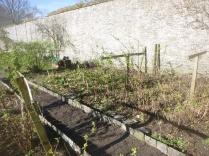 Garden - top corner 1 - 02042017