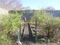 Garden - top corner 5 - 02042017
