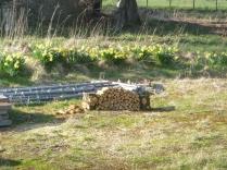 Logan's log pile - 08042017