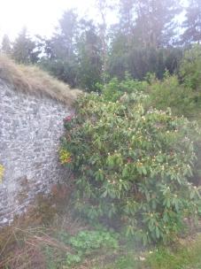 Rhod border - 14052017