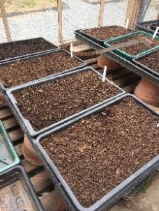 Seedlings 1 - 27042017