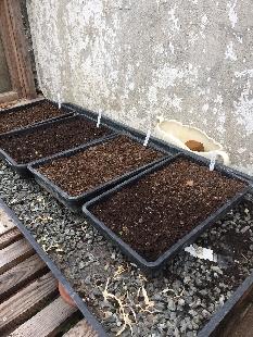 Seedlings 2 - 27042017