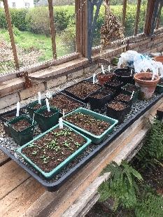 Seedlings 3 - 27042017