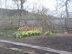 SWG - daffodils - 07042017
