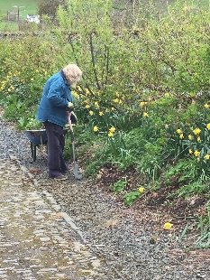 Weeding hedge - 27042017