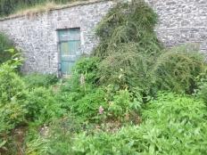 Herb border 1 - 03062017