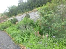 Herb border - 15062017