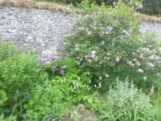 Herb border 2 - 03062017