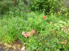 Herb border 2 - 15062017