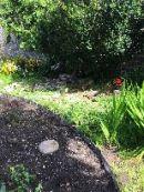 Flower Garden 1 - 08082017