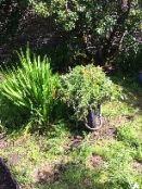 Flower Garden 2 - 08082017