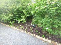 Herb border 2 - 11072017