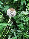 Herb border 2 - 26082017 - SH