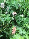 Herb border - 26082017 - SH