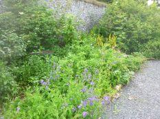 Herb border 3 - 11072017
