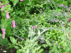 Herb border 4 - 11072017