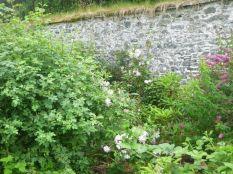Herb border 5 - 11072017