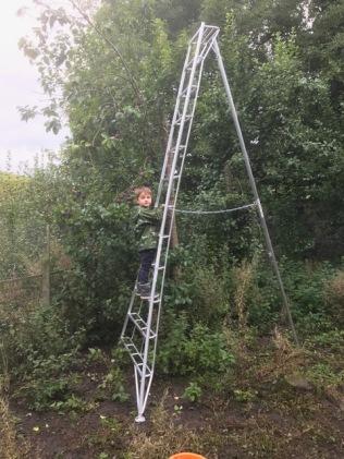 Pruning ladder 1 - 17092017