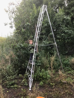 Pruning ladder 2 - 17092017
