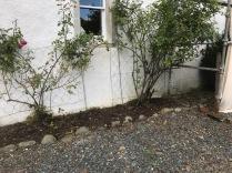 Fron flower bed weeded 3 - 05102017