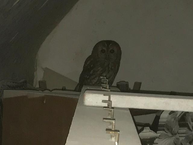 Owl 2 - 29102017