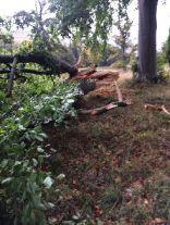 Storm damage 2 - 16102017