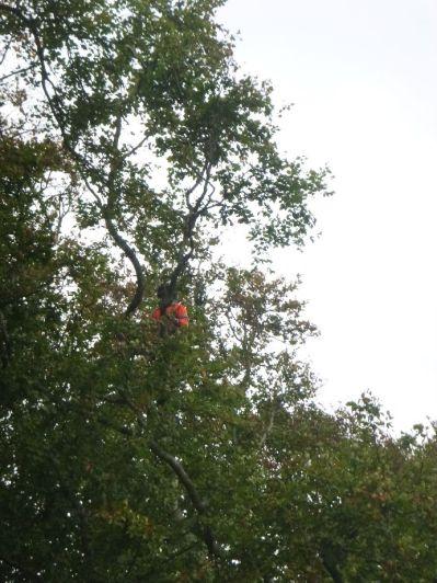 Tree surgery 2 - 19102017