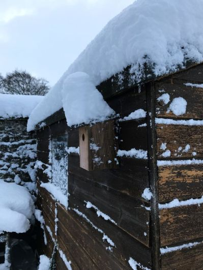 Snow 17 - 17012018