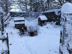 Snow 18 - 17012018