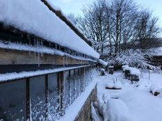 Snow 19 - 17012018