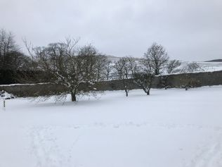 Snow 3 - 02032018