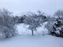 Snow 6 - 17012018